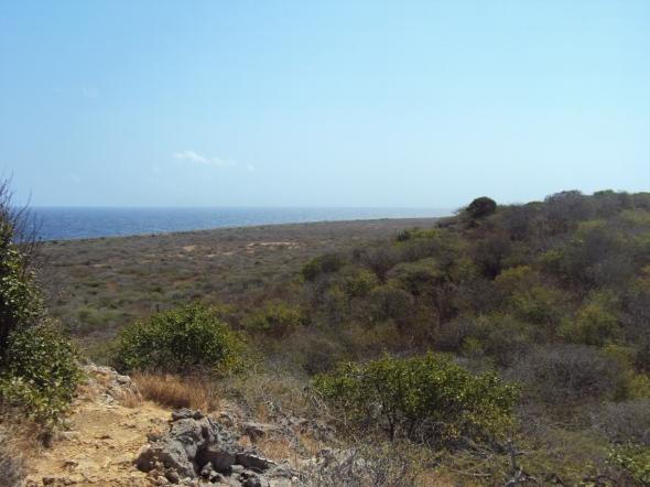 Vegetación que domina todo el Parque Nacional Christoffel en Curaçao