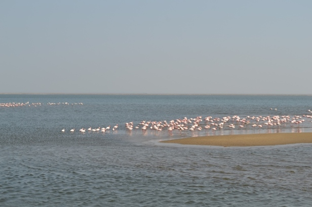 Flamingos en Walvisbaai