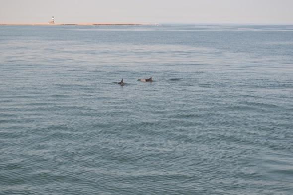 Delfines en Walvisbaai