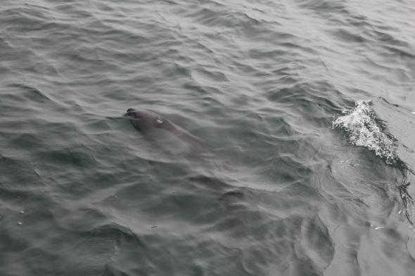Delfines en la Bahía de Walvisbaai