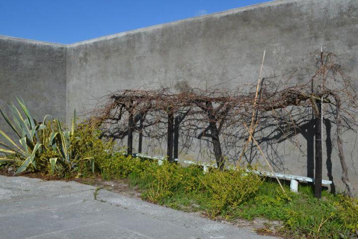 Huerta sembrada por Mandela en la cárcel de Robben Island