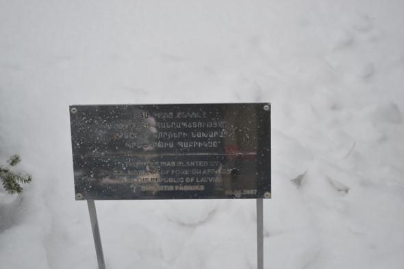 Pinos sembrados por las celebridades e importantes figuras políticas que han visitado el Museo del Genocidio Armenio