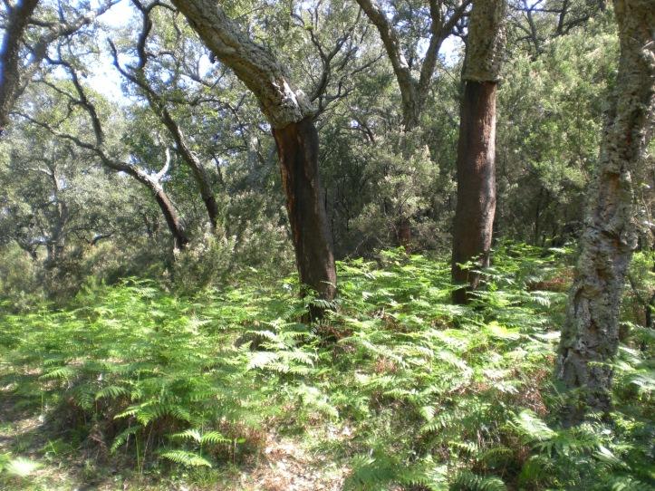 019 - Zanona (Los Barrios), 22-3-2009