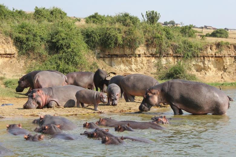 Parque Nacional Reina Isabel en Uganda