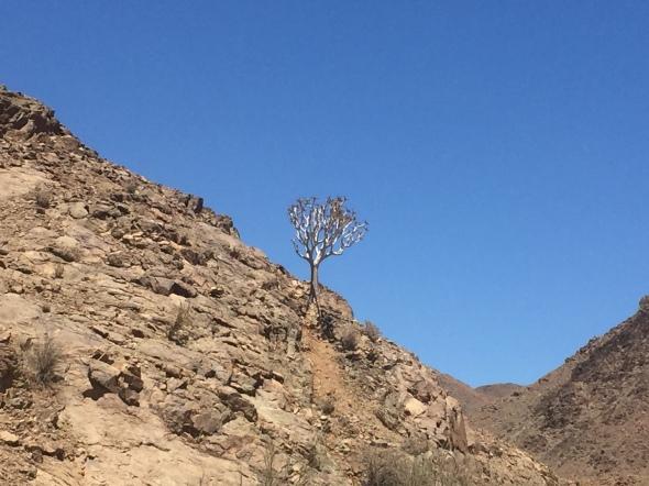 2015.12.21 Lüderitz, NA (49)