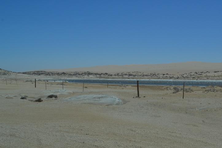 Springboks y óryxes cerca de la Playa Agate