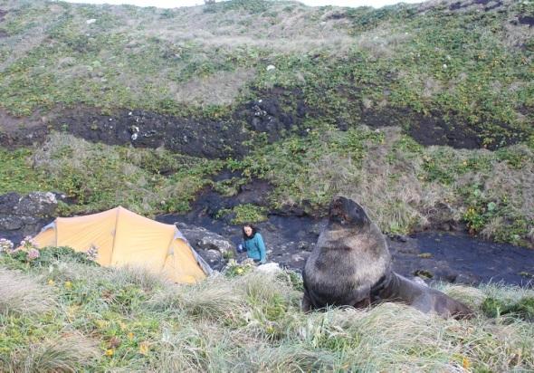 Sealion at camp IMG_3120 Photo G Parker