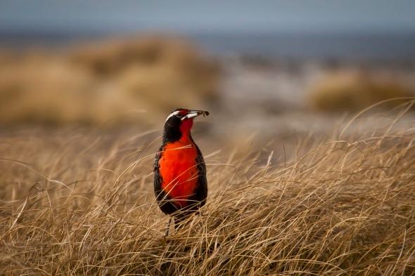 08 Bennett Stuart   Falklands-203