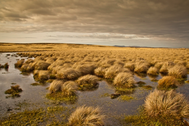 09 Bennett Stuart   Falklands-204