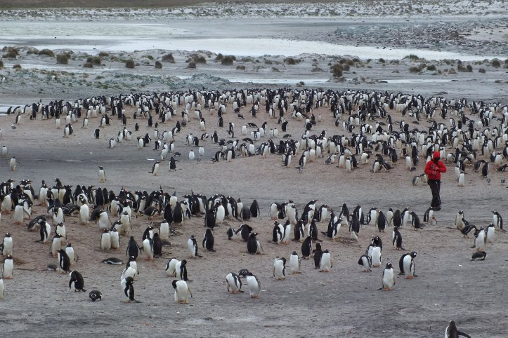 Among the penguins during population monitoring