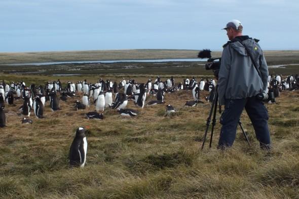 Más pingüinos