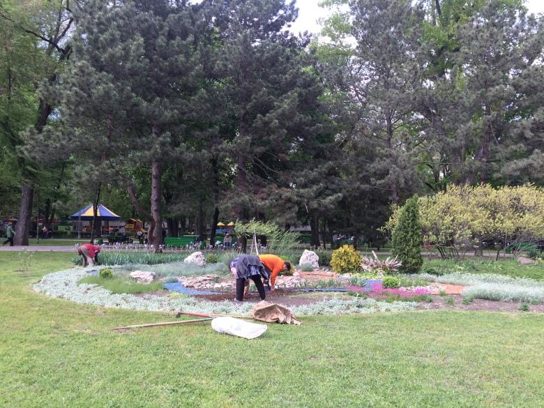 Mujeres arreglando un jardín público