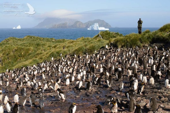 Counting Macaroni Penguins on Bird Island