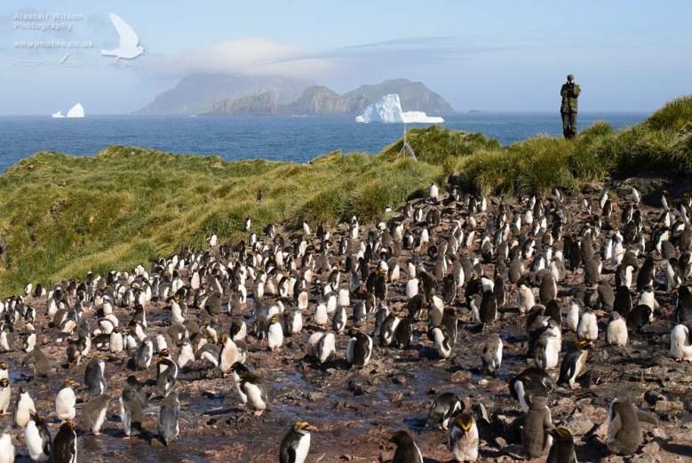 Counting Macaroni Penguins on Bird Island