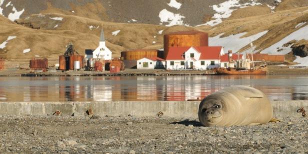 Grytviken Whaling station