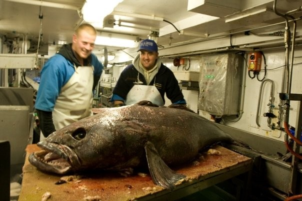 Patagonian toothfish (Courtesy of James McKenna)