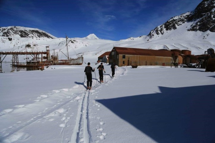 Skiing through Grytviken whaling station, following an Elephant Seal's tracks (Courtesy of James McKenna)
