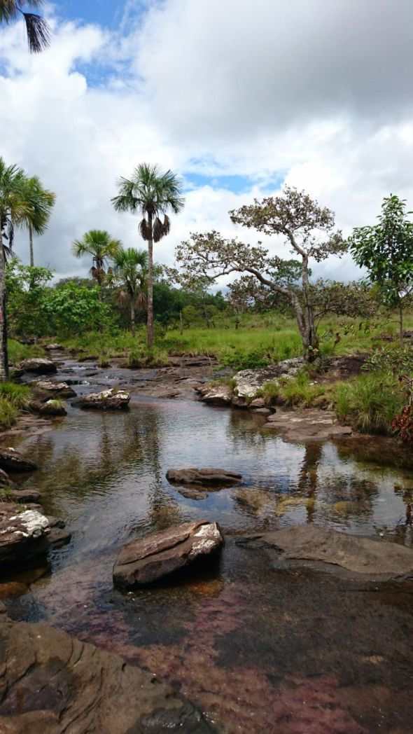 Trankilandia y la presencia de algas Pelos
