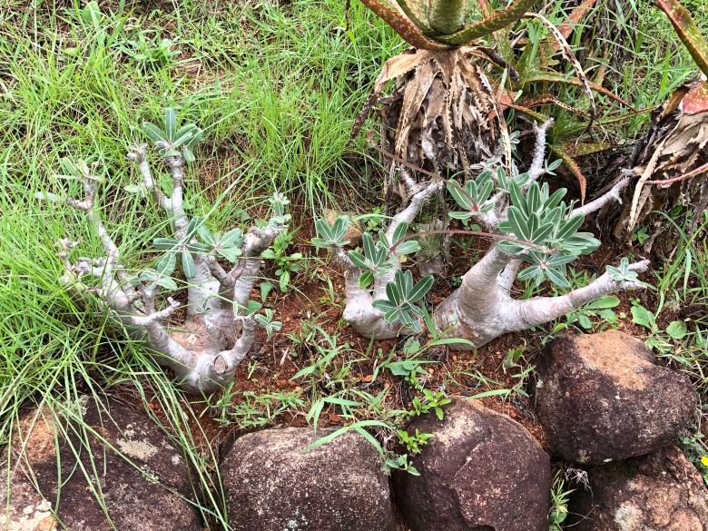 2017.12.26 Antananarivo, MG (236)