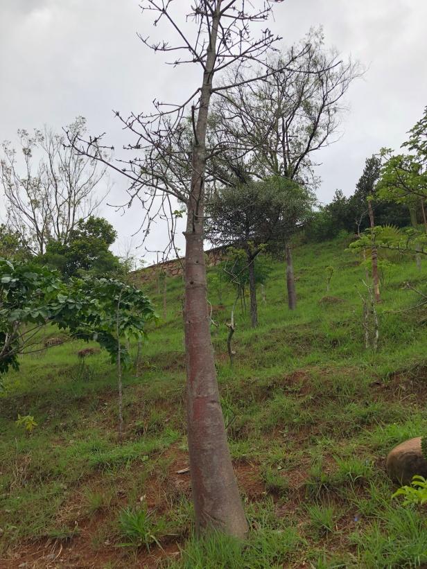 2017.12.26 Antananarivo, MG (238)