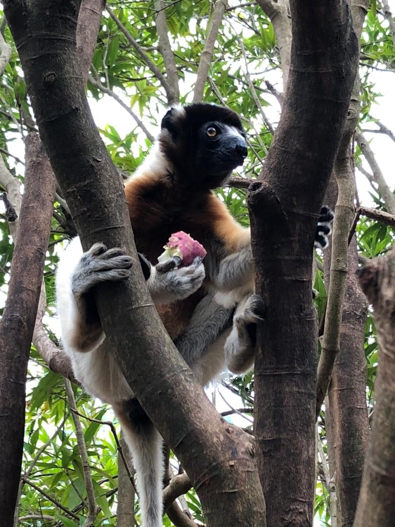 2017.12.26 Antananarivo, MG (271)