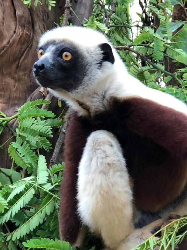 2017.12.26 Antananarivo, MG (299)